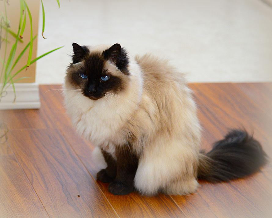 kittyW
